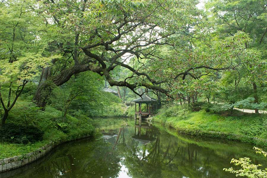 Jardín secreto en el palacio de Changdeokgung