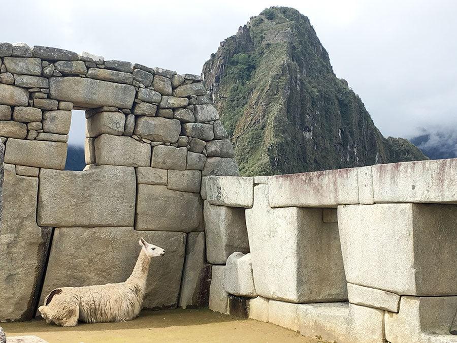 Foto de una llama en las ruinas de Machu Picchu con Huayna Picchu al fondo